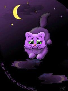 Гифка с красивым котиком, смотрящим вдаль.