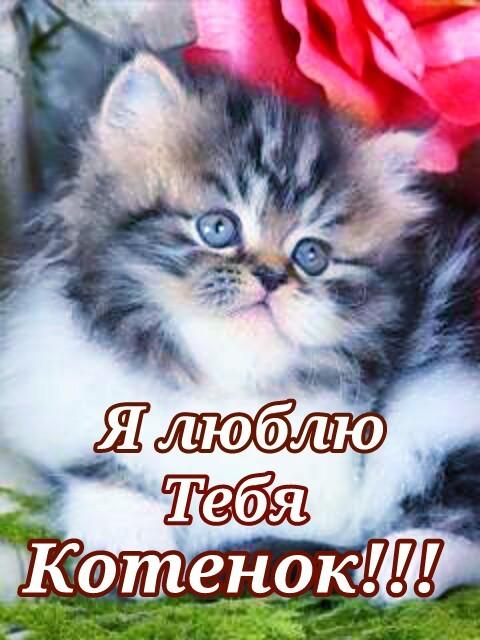 Я люблю тебя котик мой картинки с надписями, открытки воронеж