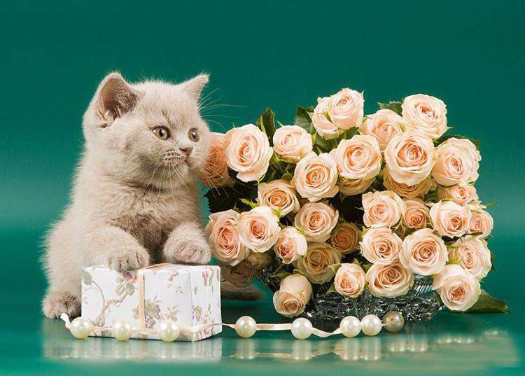 Открытка день рождения котенок, своими руками дню
